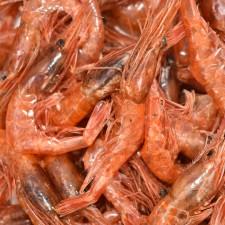 감포 빨간 새우